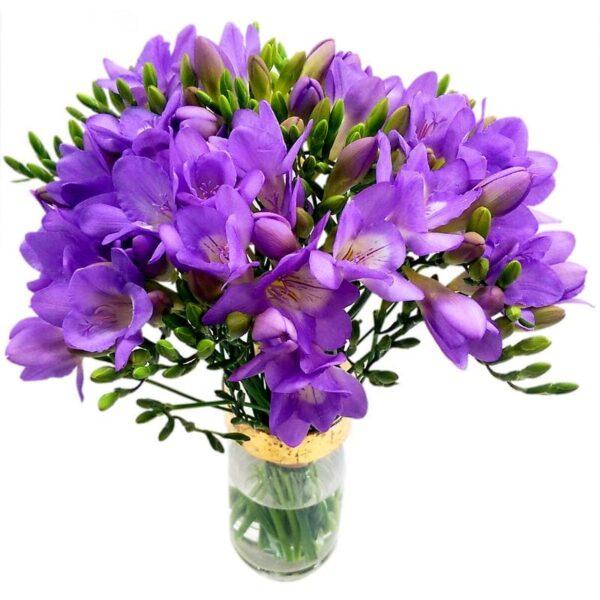 20 Purple Freesia