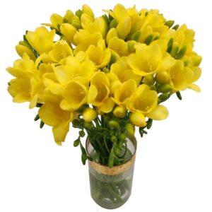 20 Yellow Freesia